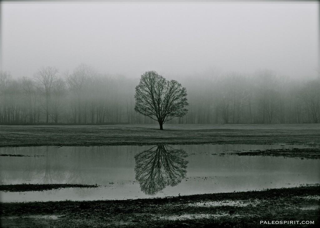 tree reflection - paleospirit.com