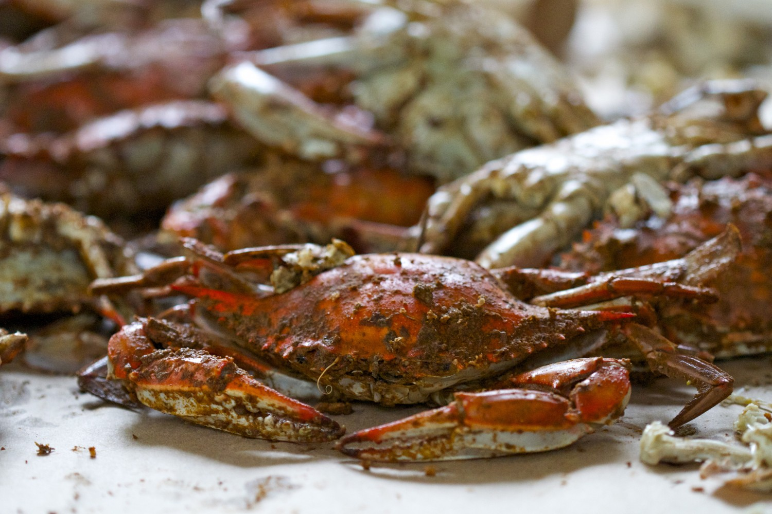 paleo in maryland steamed crabs