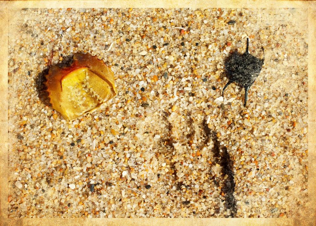 beach sand Coopers beach