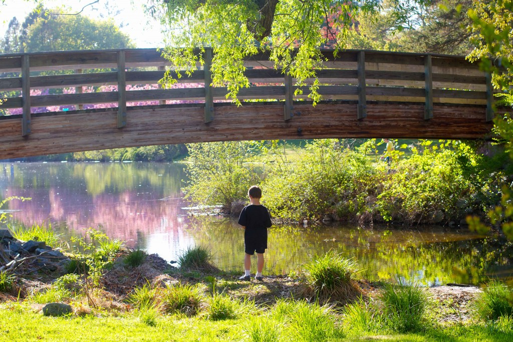 Nathaniel looks at bridge