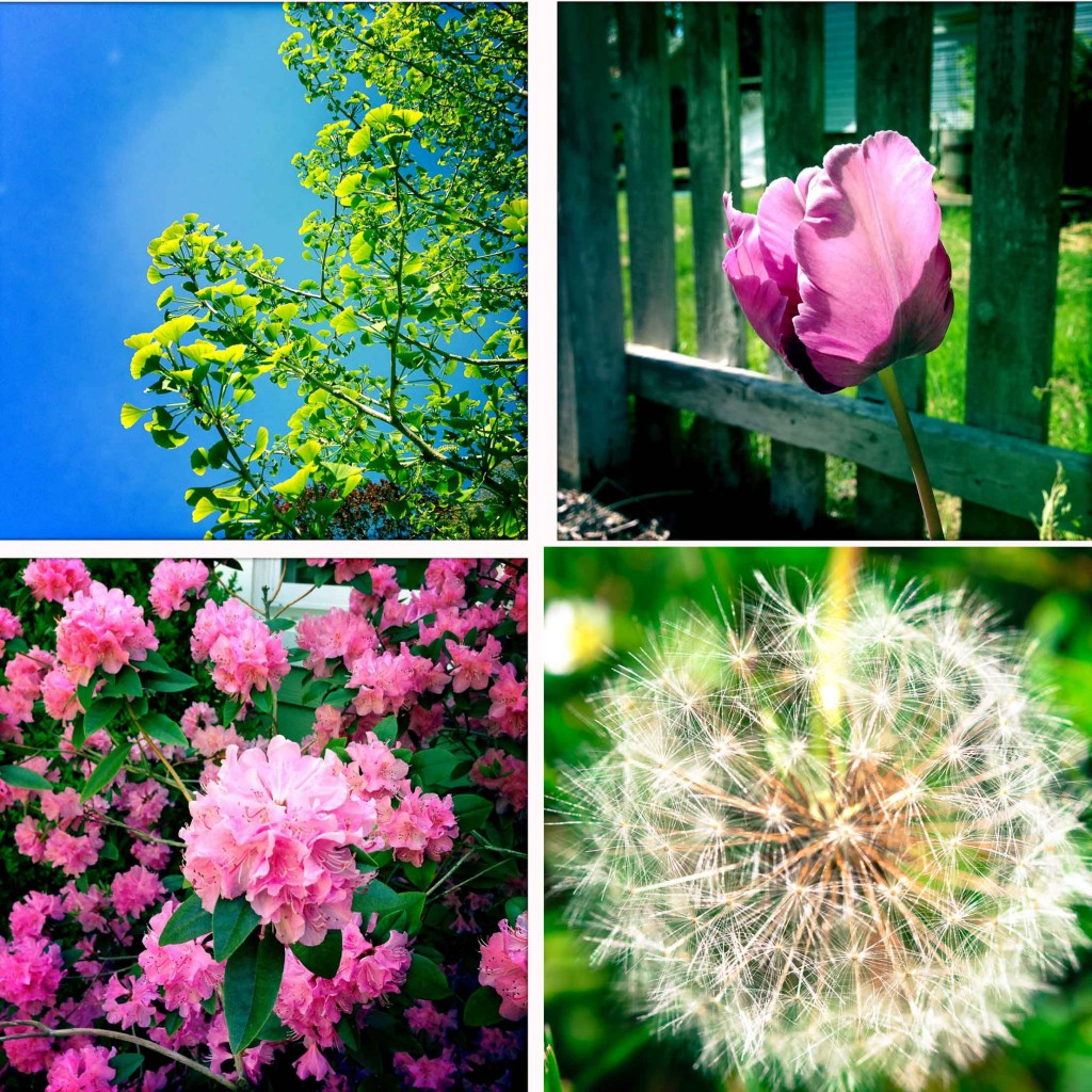 hipstamatic flowers 4-2