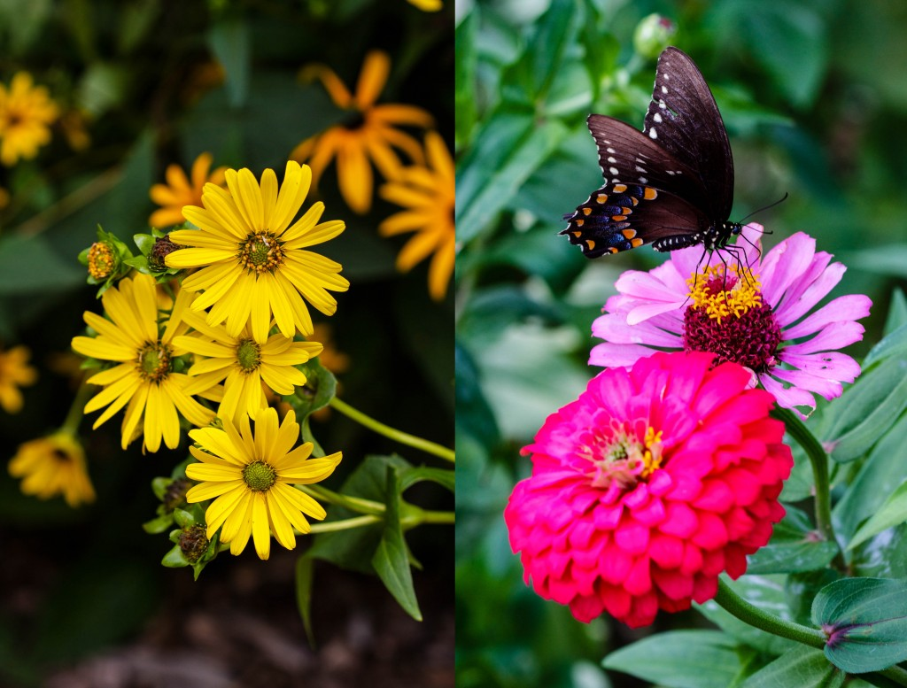 Butterflies and flowers #2
