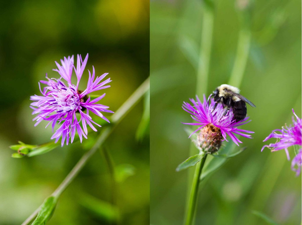 Purple flowers and bee double