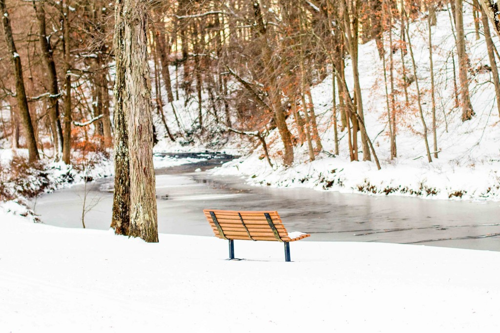 Snowy Bench: Lea Valle