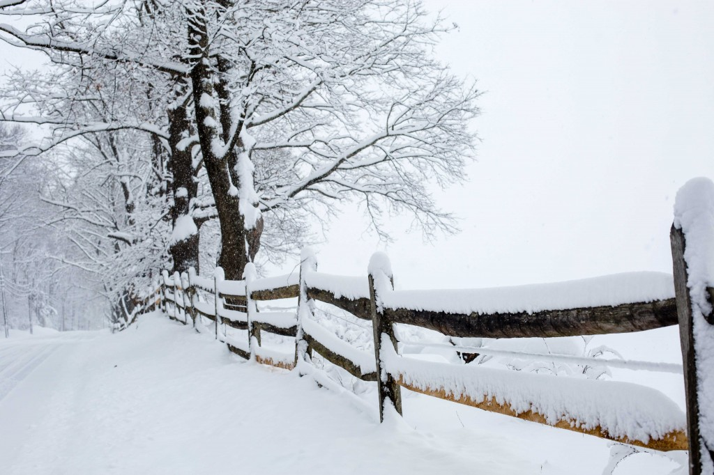 Snowy Fence   Photo by Lea Valle